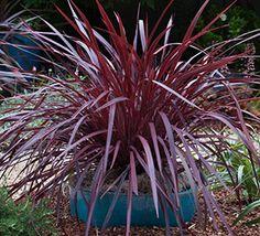 Monochromatic Color | Southern Living Plants