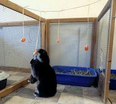 Knaagdieren en konijnen zijn levendige en slimme dieren. In een saai hok zonder afwisseling gaan zij zich snel vervelen. Ze kunnen dan ongewenst gedrag ontwikkelen, zoals knagen aan tralies en ander stereotiep gedrag. Ook kan verveling er voor zo...