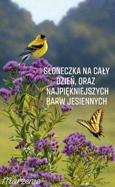 Goldfinch on Ironweed Good Morning Flowers, Good Morning Good Night, Good Morning Quotes, State Birds, Inspirational Phrases, Goldfinch, Jehovah's Witnesses, Wildlife Art, Morning Images