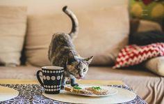 """""""Ainda sou um gato!"""": série de fotos emocionante retrata gatos especiais"""