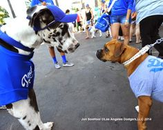 Dodgers Blue Heaven: Dodgers Let the Pups In - Woof Woof Woof