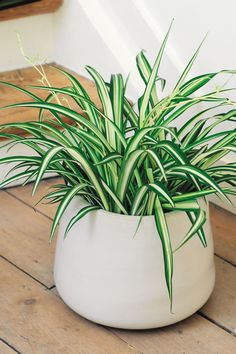 7 top tips for planting in a small space