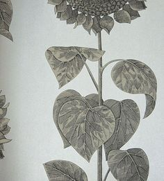 Palladio Sunflower Wallpaper Magnificent sunflowers in black on a silver background