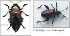 liste over danske insekter - Google-søgning