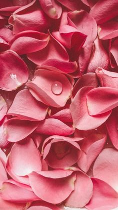 Flower Phone Wallpaper, Phone Screen Wallpaper, Iphone Background Wallpaper, Beautiful Flowers Images, Beautiful Roses, Luxury Flowers, Pink Flowers, Wallpaper Aesthetic, Butterfly Art