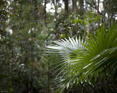 Jpg, Habitats, Backdrops, Plant Leaves, Scene, Wallpaper, Plants, Wallpapers, Backgrounds