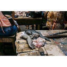 Manos de caimán en el mercado de Belén, Iquitos. . #peru #iquitos #mercado #market #travelgram #instatravel #fotografoschilenos #fotografoschile #caiman #alligator #sudamerica #southamerica #amazonas #travelphotography #fuji #fujifilm #fujix100t #fujixseries #travel #wanderlust #peruvian #street #streetphotography #streetphotographers #worldpeople #taller7foto by (danielaluksic) instatravel #sudamerica #caiman #southamerica #market #fujix100t #worldpeople #peru #wanderlust #fujifilm…