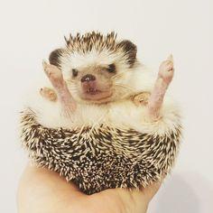 sweet hedgehog ... want. :)