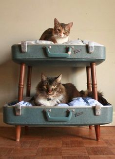 storagegeek: Amazing pet beds from Etsy shop SalvageShack! Loving the double decker converted suitcase pet beds. She has a way with salvaged materials as anyone browsing her sold items would agree. Crazy Cat Lady, Crazy Cats, Cat Bunk Beds, Diy Pet, Diy Cat Bed, Pet Beds Diy, Cool Cat Beds, Cat House Diy, Old Suitcases