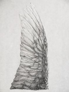 Bird wing studio, Valentina Ferrarese. Pencil on cotton Japanese paper.