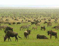 セレンゲティ国立公園 タンザニア