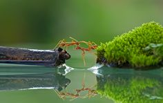 Ants helping each other cross over water. How awesome is this photo. Photography Camera, Animal Photography, Amazing Photography, Food Photography, Reflection Photographers, Teen Photo Shoots, Insect Photos, Bff Drawings, Photography Challenge