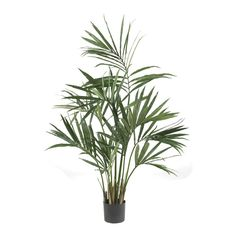 Kentia Palm Silk Tree - 5 Feet Tall -- Read more reviews of the product by visiting the link on the image.