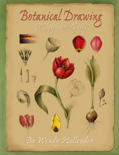 Botanical Drawing: A Beginner's Guide by Wendy Hollender {book}