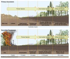 I thought that this was a great view of the adaptive cycle and goes hand in hand with my forest fire photo. I really believe that the adaptive cycle when placed in this scale is a slow but needed process.-McKena Taylor