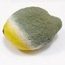 El médico me recetó compresas de limón y dije adiós a las varices en 3 días. Más
