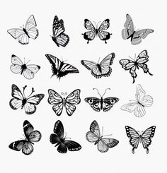 Ensemble Papillons illustration silhouettes