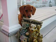 Sami the welcoming puppy