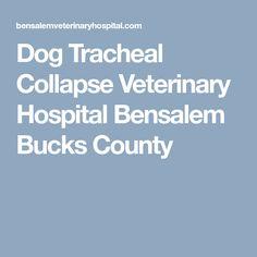 Dog Tracheal Collapse Veterinary Hospital Bensalem Bucks County