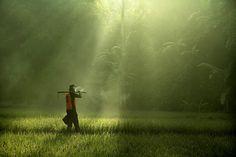 One Morning............. by dewan irawan on 500px