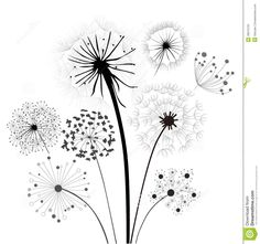 dandelion-collection-28210720.jpg 1,384×1,300 pixels