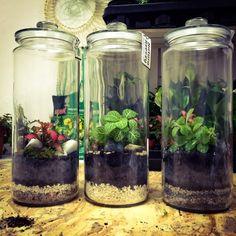 Plant in glazen pot