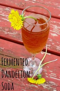"We Like Making Our Own Stuff: Fermented Dandelion Soda - interesting.maybe next year since all of ours are being ""weed and feed-ed"" Kombucha, Yummy Drinks, Healthy Drinks, Healthy Food, Dandelion Recipes, Water Kefir, Wild Edibles, Fermented Foods, Detox Drinks"