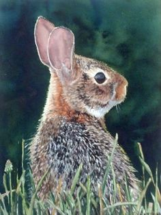 watercolor painting of whitetail bunny