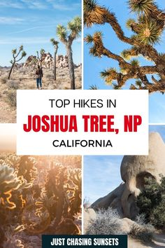 Check out this guide for awesome hikes in Joshua Tree National Park. Hiking is one of the best things to do in Joshua Tree, so make sure you read this post for all of the details! California Travel Guide, California Destinations, Beautiful Places To Visit, Cool Places To Visit, Joshua Tree National Park, National Parks, Travel For A Year, Banana Water, Best Hikes