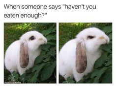 No Janet I havent. A happy and mad bunny. When you have eaten alot