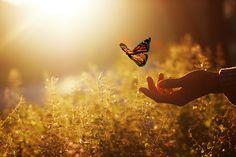 Life is Beautiful~La Vie est Belle Butterfly Kisses, Butterfly Wings, Monarch Butterfly, Belle Tof, Archangel Michael, King Of Kings, Beautiful Butterflies, Life Is Beautiful, Amazing Art