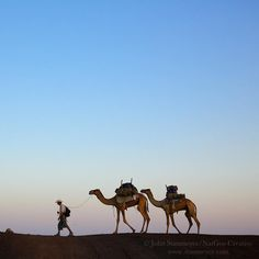 Photograph by @JohnStanmeyer  Paul Salopek walks through the desert in northern Ethiopia with camels and his Afar guides towards the Djibouti border back in early 2013 during part I of the @OutofEdenWalk.