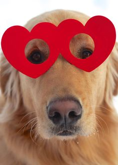 Golden Valentine's Day Homemade style heart glasses #funny