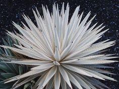 Image result for pinterest rock garden agave