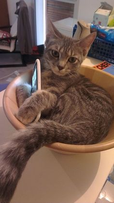 A cat that loves HTC