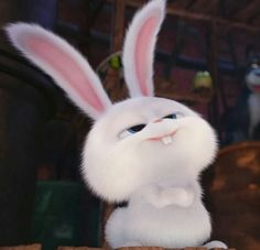 Cute rabby😘😘 Cute Photos, Cute Pictures, Snowball Rabbit, Rabbit Wallpaper, Cute Bunny Cartoon, Disney Phone Wallpaper, Cute Pikachu, Secret Life Of Pets, Cute Memes