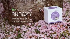 ANTOXY,  Meeting Youself, the most beautiful one!
