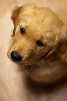 Adorable puppy eyes