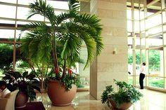 20 indoor house plants design - Garden Talk - NurseryLive Discussion Forum