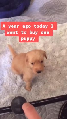 Cute Funny Dogs, Funny Dog Memes, Funny Dog Videos, Cute Funny Animals, Pet Videos, Cute Pets, Crazy Funny Videos, Adorable Babies, Wtf Funny
