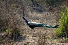 #World famous #Birds #Sanctuary in #India. http://www.bharatpurbirdsanctuary.in/