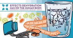 Everyone knows dehydration is bad for the body, but do you know what the effects are? It's important that you drink eight 8-ounce glasses of water every day.