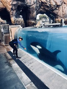 Amaya the orca playing with her trainer at SeaWorld San Diego Orcas Seaworld, Dolphin Trainer, Marine Biology, Ocean Creatures, Killer Whales, Sea World, Marine Life, Life Is Beautiful, Mammals