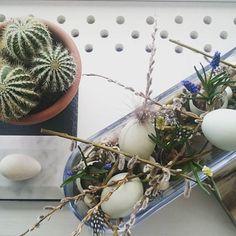 Nem og enkel påskedekoration 🐣🌿 Kig forbi bloggen for nem DIY  Www.mamenohr.dk  #påskepynt#påske#dekoration#boligindretning#æg#blomster#blomsterdekoratør#perlehyacinter#nordichome#flower#eggs#easterflowers#easter#diys#DIY#doityourself#gørdetselv#Mamenohr#