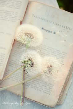 vintage book and dandelion