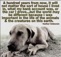 Be important in the life of animals. You are their entire world- and their voice.