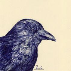 Ballpoint Pen Black Crow by kleinmeli on DeviantArt Portrait Illustration, Illustration Sketches, Illustrations, Purple Pen, Ballpoint Pen Drawing, Beautiful Drawings, Animal Paintings, Pablo Picasso, Tolkien