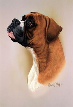 Boxer DogHead Study Print