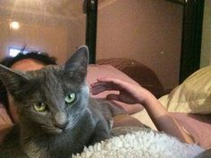 Kitten-Ashie : watching the Secret Life of Dogs