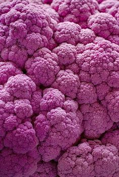Purple cauliflower is very similar to its more commonly seen green colored…